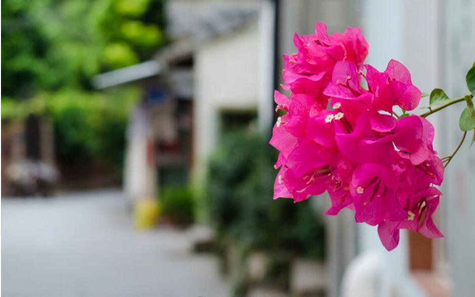 又到一年赏花季——厦门高逼格赏花攻略